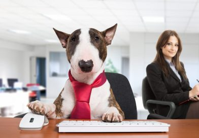 Having a Pet at the Office can Really Boost Your Productivity Up by 100%