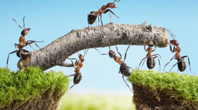 Amazing Team Building Activities to Boost the spirits of Your Employees