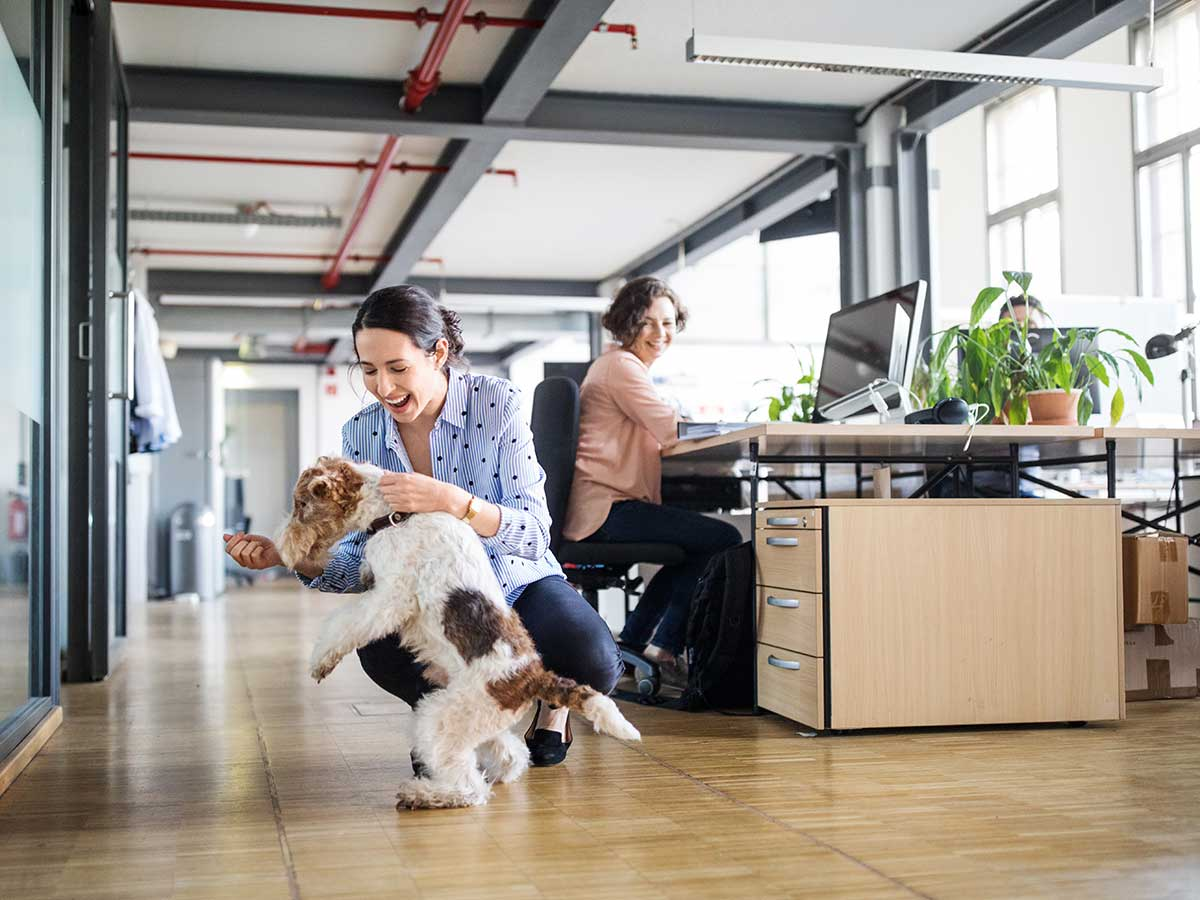 Image result for bring pets at workplace